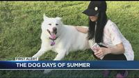 'Dog days of summer' hit Rochester