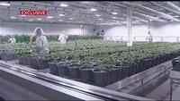 EXCLUSIVE: Rochester company invests billions in Canadian weed company