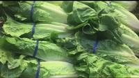 People in US, Canada warned to not eat romaine lettuce