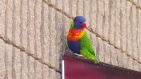 Missing exotic pet bird turns up at TV studio in Albany