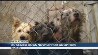 80 of 'Naples 85' dogs seized from home now up for adoption