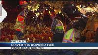 Truck driver hits downed tree in Brighton