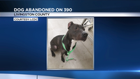 Dog found tied to guard rail on I-390 in Livingston County