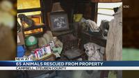 Steuben County man arrested for animal cruelty, 65 animals seized