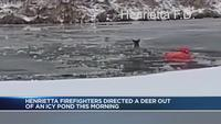 Henrietta firefighters save deer from icy water